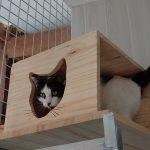 Cachette pour chat